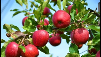 Thumb apple valley kashmir images tourist attraction